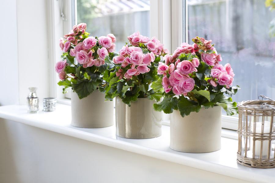 Домашние комнатные цветы в интерьере
